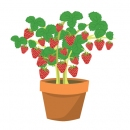 Counting Art-Strawberry Plant, CLIENT: Sylvan Learning