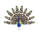 Counting Art-Peacock, CLIENT: Sylvan Learning